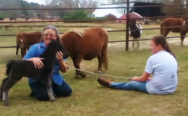 Baby Horse 1