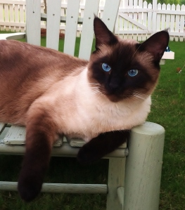 When he gets older we can call him Old Blue Eyes.  Handsomest kitty EVAH!