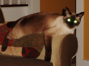 I can see the future...they will be very happy in their new home--Mulder the Magnificent!