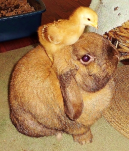 The most tolerant bunny in the world.