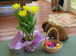 Still Life with Bunny