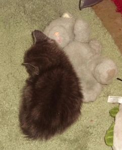 Sleeping with his stuffed buddy.