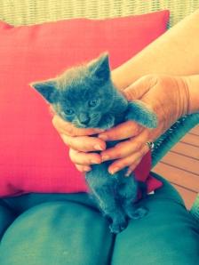 Meet Smokey :)