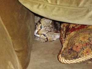 I'm a lion and dis is my cave!