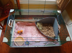 litter box with hay, water bowl, pellets, chew toys, soft rug--Check!