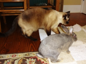 Listen Graycie, Buster is a pretty chill bunny.  You gotta give him a chance, OK?