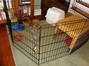 Water jug, pellet bowl, wicker basket for chewing, hay, more chew toys, cubby cardboard house & litter box.