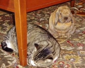 Rowdy, why won't she like me?  Do I have bad breath?  No silly bunny, your breath smells like carrots.