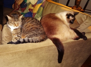 A rare peaceful moment with two kitties who usually bat at each other and refuse to play nice.
