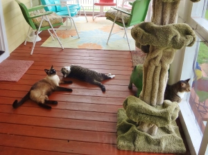 The life of a housecat is often grueling and stressful.