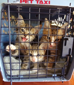 At first, they weren't too happy about their arrival at the Burlingame Kitten Farm.