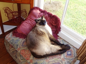 """Sleeping Cat"" pose."