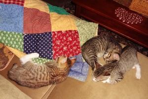 Sleeping kitten pose.