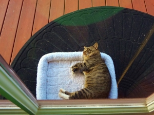 "GT enjoying his swanky fleece kitty bed on ""his"" side porch."
