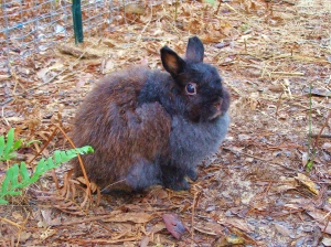 My name is Emma.  I am a Dwarf and I was abandoned after my owner became bored with putting me in shows.  :(