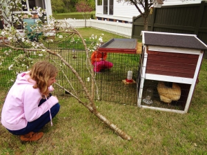 They learned about urban chicken farming.