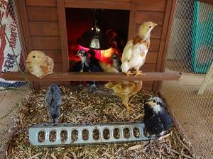 Very pretty little peckers.