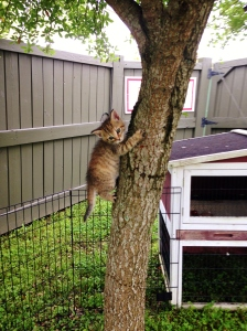 Every kitten should get to climb a tree once in his life.
