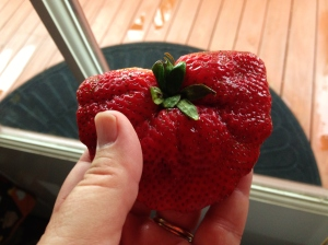 I don't normally cuss, but this is a BIG ASS STRAWBERRY!