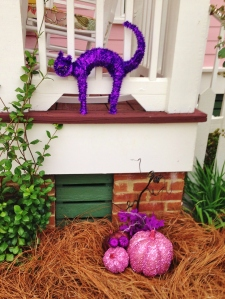 Scary cats and pink & purple punkins!