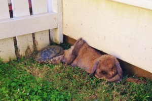 Buster and my current rescued turtle. I think they're discussing racing strategies.